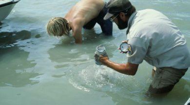 El Biólogo Ambiental